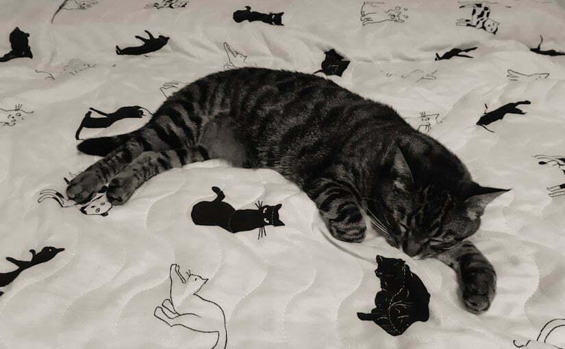 Singur la izolare, cu pisica Mojito